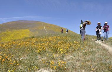 Protection question:  The Carrizo Plain National Monument is under review by the federal government